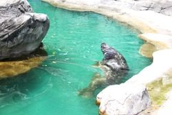 A sea lion show, a show with detail of marine animals.