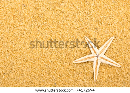 a sea star on the sand of beach