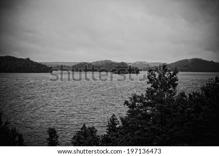A sea view with foliage in black and white.