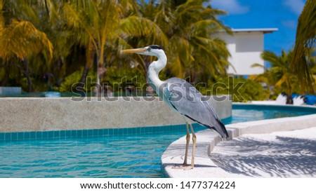 A seabird with a sharp beak