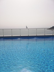 A seagull alone in the pool
