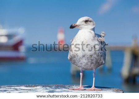 A seagull at the foreground of a harbor scenery/Harbor Bird