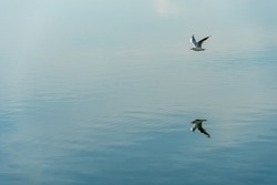 A seagull hovers over the calm water of the lake. Serenity and silence over the surface of the sea. The reflection of a flying gull and the sky in the smooth surface of the water.