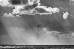 A seagull is flying under bunches of light rays from the sun and cloudy sky over the sea.