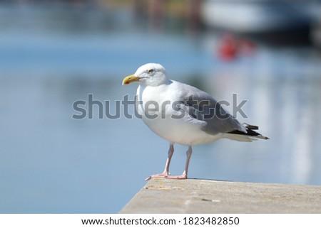 A seagull on a stone on the Jade-Ems-Kanal in Wilhelmshaven, Germany Zdjęcia stock ©