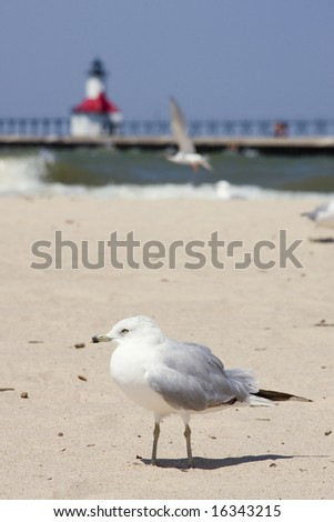 A seagull on Silver Beach in St. Joseph, Michigan, with lighthouse out of focus in the background.