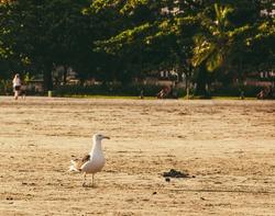 A seagull on the beach sand.