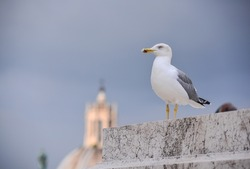 A seagull perched on the terrace of the Victor Emmanuel II National Monument (or Vittoriano), central Rome, Italy