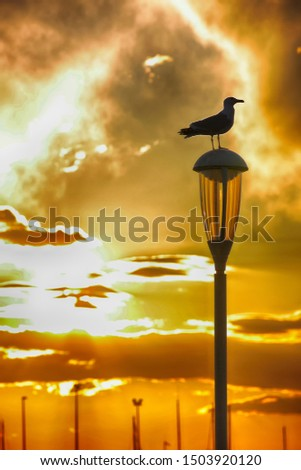 A seagull posed on a lamppost