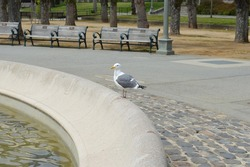 A seagull resting on a fountain in Golden Gate Park, San Francisco
