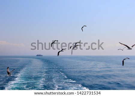 a seagull's rapid and light evolutions on the mediterranean sea and blu sky