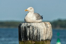 A seagull sits on a post