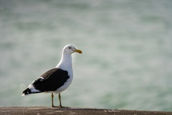 a seagull standing next to the ocean