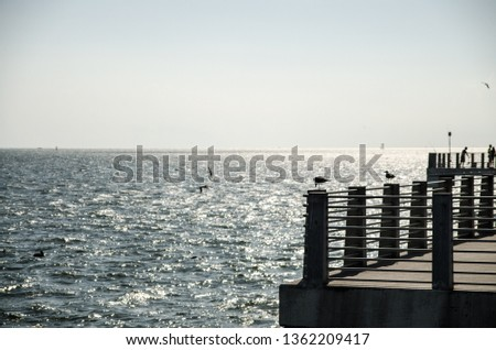 a seagull standing on a railing pillar in a fishing pier, with bright sun hitting from the top and the caribbean sea in the back #1362209417