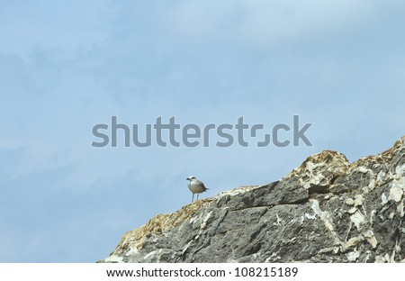 A seagull standing on the rocks under blue sky