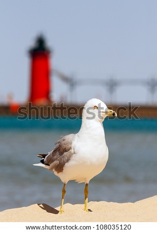 A seagull stands on beach sand with the South Haven Lighthouse and Lake Michigan behind.
