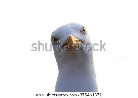 A seagull was staring at the camera. A great number of pictures were taking until the animal fixedly looked at the camera.