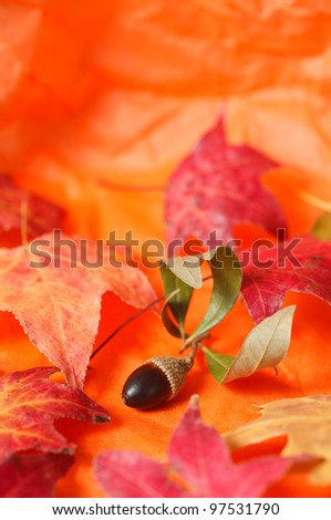 A seasonal arrangement with an acorn and maple leaves with an orange paper  background.
