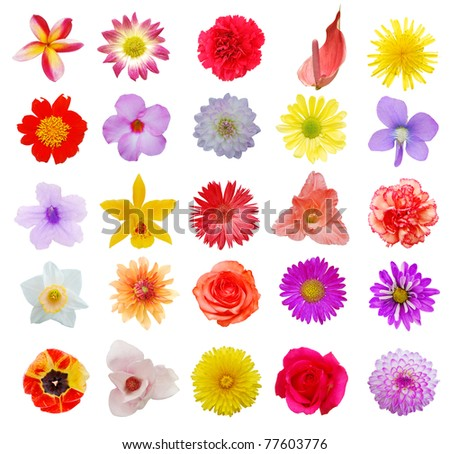 A seasonal flowers collection