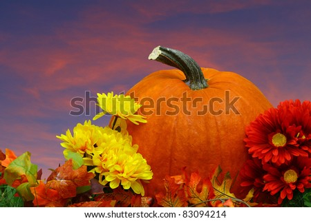 A seasonal holiday thanksgiving Pumpkin setting amongst the flowers with a fall sun setting night sky with room for your text.
