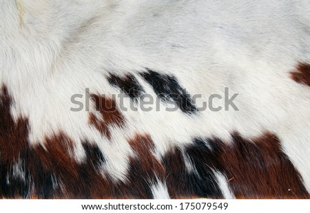 A Section of Genuine 100% Cow Hide with its Fur still attached. Cow Hide and Cow Leather are used around the world for many different things, from purses and shoes to gun holsters, belts, and more.