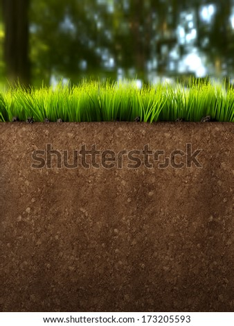 A section of land with grass and soft background