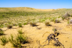 A section of the spring desert with sand dunes and sparse vegetation