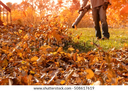 A section of yard is cleared from a large pile of fallen leaves