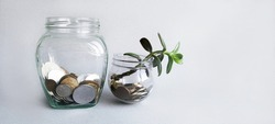A seedling grows out of a glass jar of coins. A sprout grows in the jar. White table. Budget saving money concept with copy space for web banner.