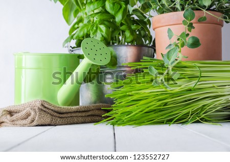 A selection of potted home grown culinary herbs on an old white painted wood table with watering can and hessian sack.  Representing kitchen scene or potting table.