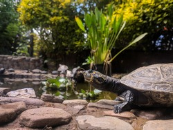 A selective focus of a giant sea turtle with patterns standing on the rocks in the zoo