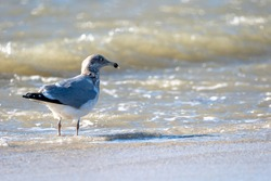 A selective focus shot of a seagull on asandy beach