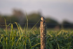 A selective focus shot of a small bird perched on a wooden fence