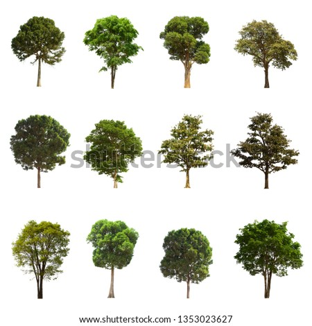 A separate tree set is set on a white background. The image is clear. Suitable for all types of work.