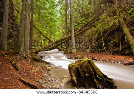 A serene mountain stream flows through lush forest    - Margaret Falls in Herald Provincial Park, British Colombia, Canada