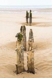 A series of disused wooden posts found on Titchwell beach in North Norfolk. These posts are now covered in sea weed and crustaceans due to them being covered in high tide.