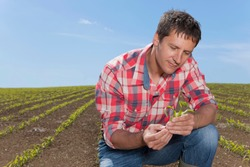 A serious farmer crouching down in the farm field while examining a corn seedling under the bright blue sky