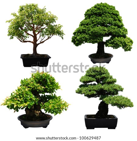 A set of aged bonsai trees