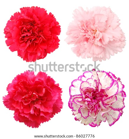 A set of carnation flowers