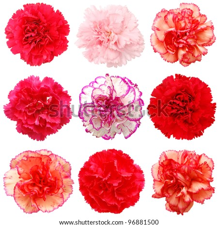A set of 9 carnation flowers