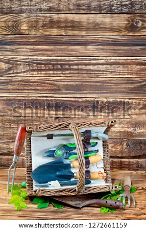 A set of garden tools rake, scissors, scoop, saw, pruner are in a rectangular wicker basket on a wooden floor on the background of an old wooden wall close-up indoors. Next to the basket are green lea #1272661159