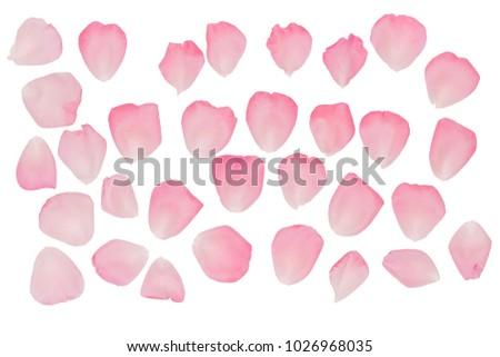 A set of rose petals. Rose-petal. Pink rose. #1026968035