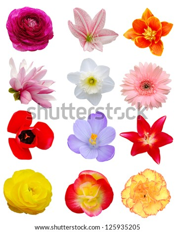 A set of Spring open flowers