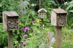 A Set of Three Wooden Bug Houses for Small Insects.