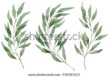 A set of watercolor eucalyptus leaves and branches. Design elements for patterns, laurels and compositions for wedding or invitations in floral style. Real watercolor. Botanical illustration.