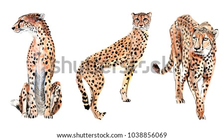 a set of watercolor illustrations of leopards