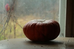 A shaded orange pumpkin lies on a table indoors against a backdrop of a window and a rural fall look with dried leaves of wild grapes. Still life pumpkin on the table and dry leaves.