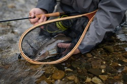 a shallow fisherman with a fishing rod in his hand holds a beautiful grayling fish in a fishing net