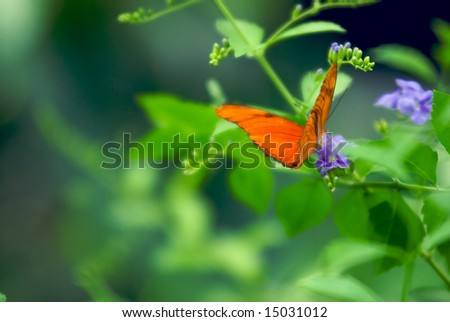 A shallow focus image of a Beautiful Red Butterfly landing on a tree branch