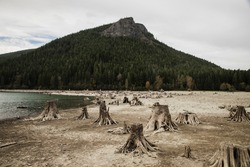 A shallow lake losing water during a long summer in the pacific northwest. So shallow ancient trees normally underwater are exposed